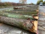 去皮原木, 橡木