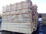 Vender Larix , Pinus - Sequóia Vermelha, Abeto - Whitewood 23-151 mm