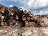 Vender Troncos Serrados Mogno Suriname