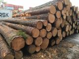 Venta Troncos Para Aserrar Pino Silvestre - Madera Roja FSC Letonia