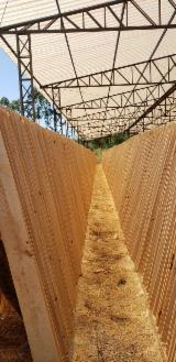 Fordaq лісовий ринок - MM WOOD BRAZIL - Обрізні Пиломатеріали, Сосна Ладанна, FSC