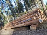 Spruce Logs from Germany BC, 5.6 or 11.4 m Long