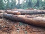 锯木, 腺状纽敦豆木