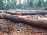 Dabema Saw Logs, A/B, 60-120 cm