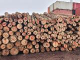 Schnittholzstämme, Fichte , FSC