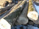 Schnittholzstämme, Bergahorn, Esche
