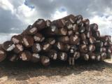 Venta Troncos Para Aserrar Angelim Pédra, Ipe , Jatoba Surinam