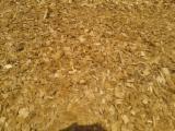 Topola Piljevina Od Korišćenog Drveta Rumunija