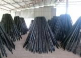 Find best timber supplies on Fordaq - Gia Tran Wood - Magnolia/Acacia/Eucalyptus Poles, 30-80 mm