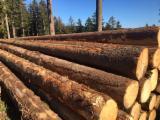 Spruce Logs, diameter 10+; 20+; 25+ cm