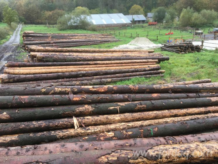 Spruce-Saw-Logs-For-Sale