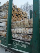 Birch Saw Logs, 18-40 cm Diameter