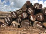 Schnittholzstämme, Abarco