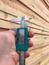 Vender Pinus - Sequóia Vermelha 18-20 mm