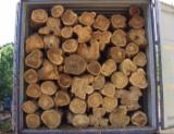 null - Vendo Teak Wood Logs-trozos/Timber-Madera aserrada por medida