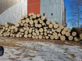 Oak Saw Logs For Sale, 30-80 cm