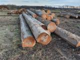 Beech Logs, AB