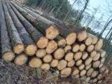 Vender Troncos Serrados Pinus - Sequóia Vermelha Alemanha Brandenburg
