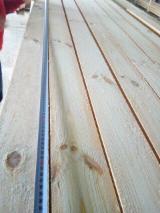 Vender Pinus - Sequóia Vermelha 20-30 mm