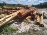 Schnittholzstämme, Wacapou