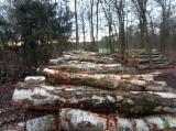 Endüstriyel Tomruklar, Huş Ağacı , PEFC/FFC