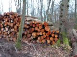 Stämme Für Die Industrie, Faserholz, Schwarzerle, PEFC/FFC