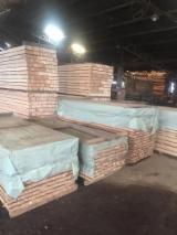 木板, 褐红娑罗双木