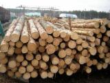 Vender Troncos Serrados Pinus - Sequóia Vermelha Ucrânia