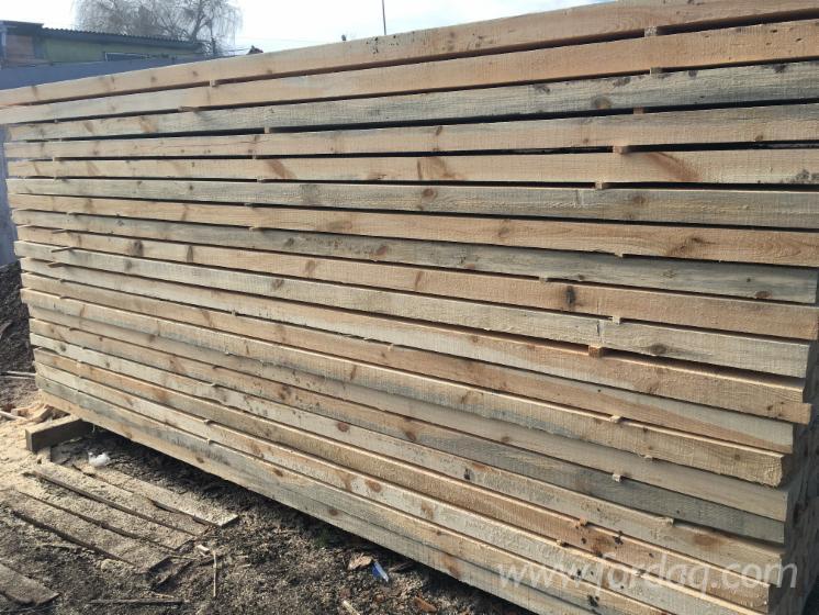 Vender Pinus - Sequóia Vermelha 62 mm Ucrânia