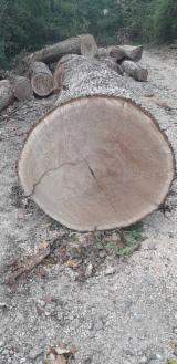 Selling Oak Veneer Logs, 36-40cm (without the bark)