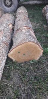 Furnierholz, Messerfurnierstämme, Eiche