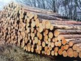 Vender Troncos Serrados Pinus - Sequóia Vermelha, Pinheiro Negro Europeu República Checa