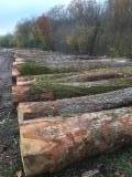 null - Oak Industrial Logs 30-39/ 40+ cm Diameter