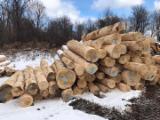 We Sell Ash Saw Logs, Diameter 10+ in