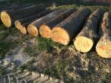 Vindem Bustean De Gater Stejar