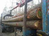 Larch 30+ cm ab Saw Logs Belgium