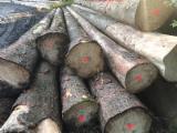 Orman Ve Tomruklar - Kerestelik Tomruklar, Ladin - Whitewood