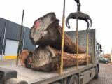 Orman Ve Tomruklar - Kerestelik Tomruklar, Karaağaç