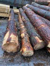 Orman Ve Tomruklar - Endüstriyel Tomruklar, Ladin - Whitewood
