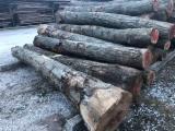 tronchi di noce europeo