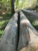 null - Beech logs Peeling grade