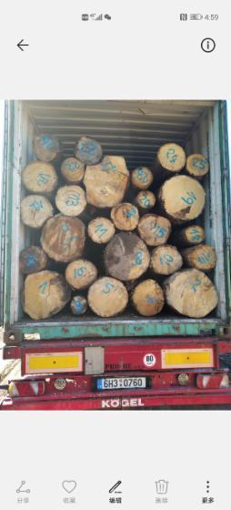 Spruce-Siberian-Spruce-Peeling-Logs