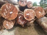 null - 锯木, 紫心苏木, 双柱苏木, 圭亚那乳桑木