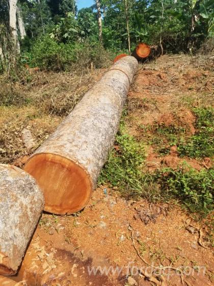 Doussie-Saw-Logs