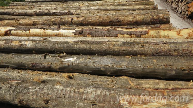 Cedrus-Atlantica-Logs