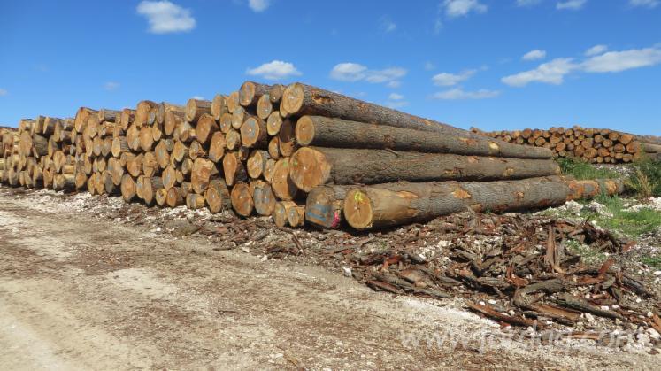 Douglas-Fir-Saw-Logs