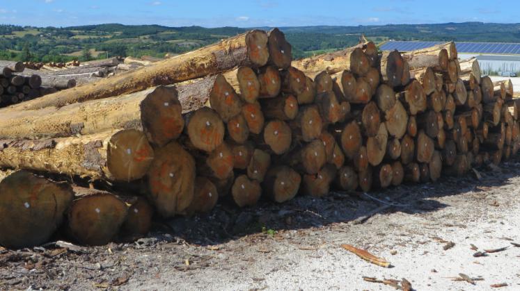 Schnittholzst%C3%A4mme--Fichte-