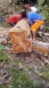 null - Vendo madera de teak wood, inventario 2020 de 125 Mil Árboles de 0.88-1.42 CM. longitud y 2.50 metros de largo