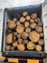 null - 锯木, 云杉