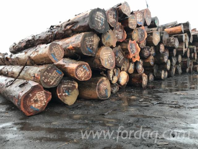 Ekop-%28Beli%29-Saw-Logs-From-Cameroon
